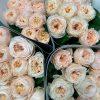 VIP Roses